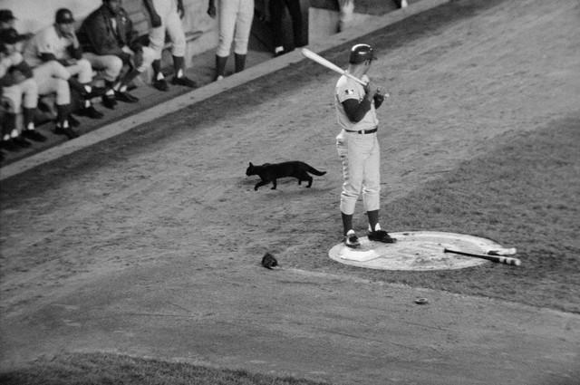 5black-cat-wrigley
