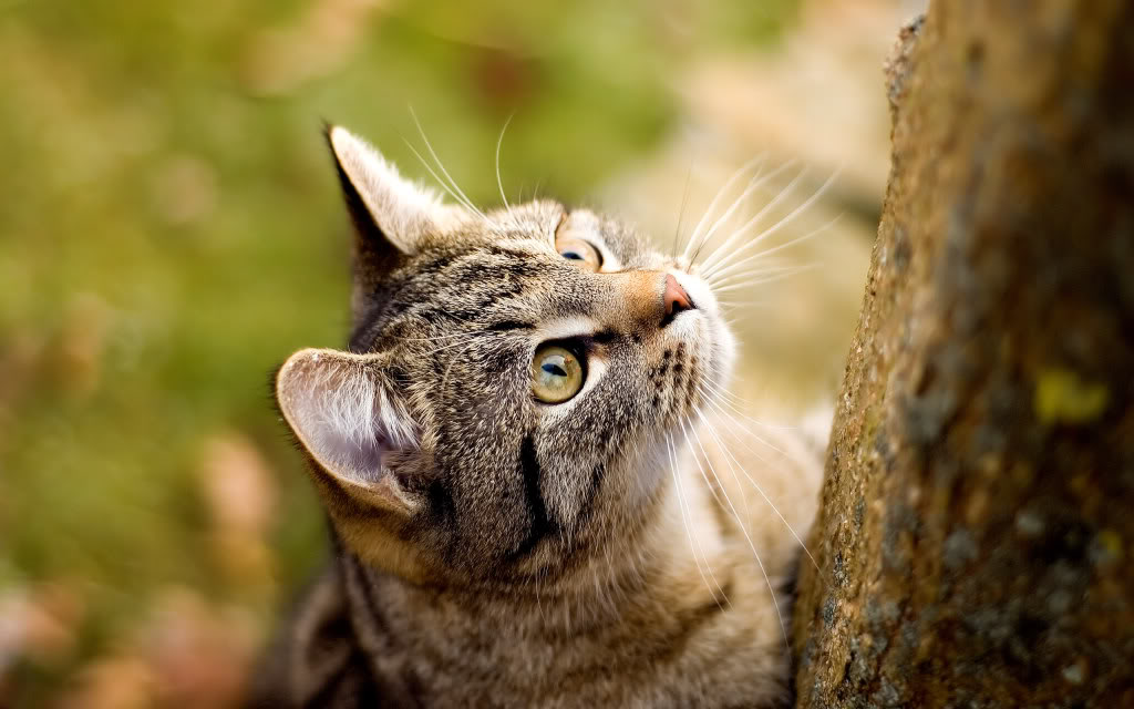 cats20curious